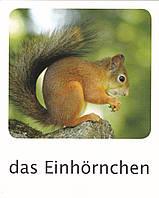 Развивающие карточки на немецком языке (аналог карточек Домана)