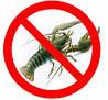 Запрет на ловлю раков в Украине