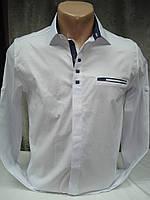 Рубашка Noseda мужская приталенная,стрейчевая  42 размер(S)