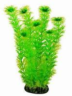 Aquatic Plants (Акватик Плэнтс) Аквариумное растение, 29 см х 6 шт/уп.