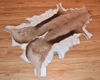 Шкура антилопы, фото 1