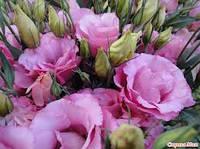 Квіти міні-пакет