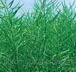 Семена рапса сорт Экстенд (Monsanto)