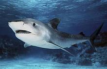 Маски акулий жир