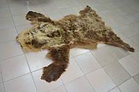 Шкура-ковер из медведя
