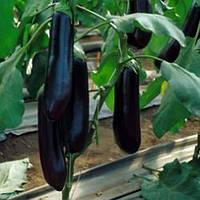 Баклажан Найт Леди F1 семена продуктивного среднераннего гибрида цилиндрической формы