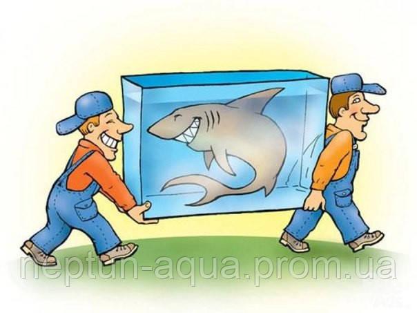 Переезд и транспортировка аквариума