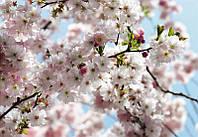 """Флизелиновые фотообои """"Весна"""" 368х254 см  , фото 1"""
