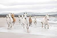 """Фотообои """"Белые лошади"""" 368х254 см"""