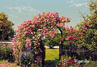 "Фотообои ""Розовый сад""  368х254 см"