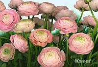"""Фотообои  """"Нежные розы"""" 368х254 см"""