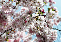 "Фотообои ""Весна"" 368х254 см"