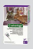 Bayer (Байєр) Advantage (Адвантікс®) 80 - для кішок понад 4 кг (упаковка 4 піпетки, ціна за 1 шт)