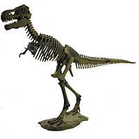 Скелет динозавра - Тираннозавр (D501)