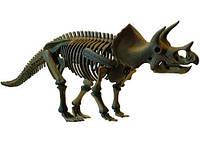 Скелет динозавра - Трицератопс (D502)