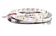 Светодиодная лента SMD 5630 13.6W 60 LED/m IP20 Холодный белый Cool white