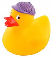 Игрушка-пищалка для купания Утка - 2/990, Canpol babies, утка в синей кепке (2/990-1)