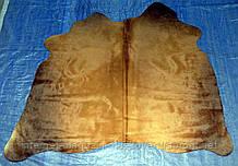 Продаж тетячьих шкур рудого кольору в Харкові