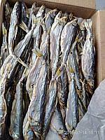 Вяленая корюшка (зубатка) с икрой 23-27 см