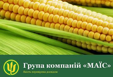 """Гибриды кукурузы ГК """"МАИС"""" Черкасы"""