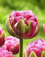 Тюльпан Aveyron  3 шт