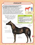 Коні і поні. Міні-енциклопедія, фото 6