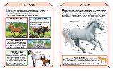 Коні і поні. Міні-енциклопедія, фото 2