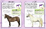 Коні і поні. Міні-енциклопедія, фото 4
