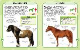 Коні і поні. Міні-енциклопедія, фото 5