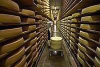 Холодильное оборудование для камер созревания сыра.