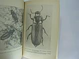 Шовен Р. Мир насекомых (б/у)., фото 6