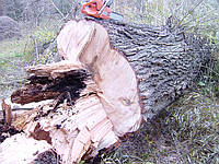 Удаление деревьев Киев.