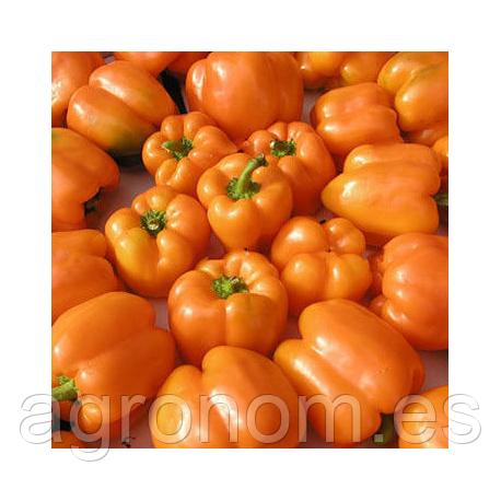 Семена перца Орени F1 1000 семян Semo