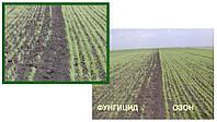 Экологически чистая - Предпосевная обработка семян и зерновых культур Озоном, фото 1
