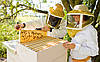 Пчеловодство- увлекательное занятие!