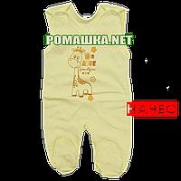 Ползунки высокие с застежкой на плечах р. 56 с начесом ткань ФУТЕР 100% хлопок ТМ Алекс 3167 Желтый