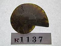 Натуральный камень к1037 (3). АММОНИТ