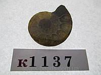 Натуральный камень к1037 (10). АММОНИТ