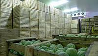 Овощехранилище.Оборудование для хранения моркови и капусты