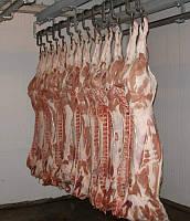 Полутуша свиная обрезная