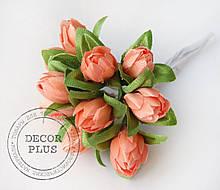 Тюльпанчики персиковые
