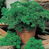 Семена петрушки Кадерава 50 грамм Semo