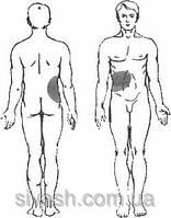 Лечение функциональных нарушений желчных путей и желчного пузыря