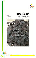 Семена базилика Ред Рубин(мелкая фасовка) 1гр