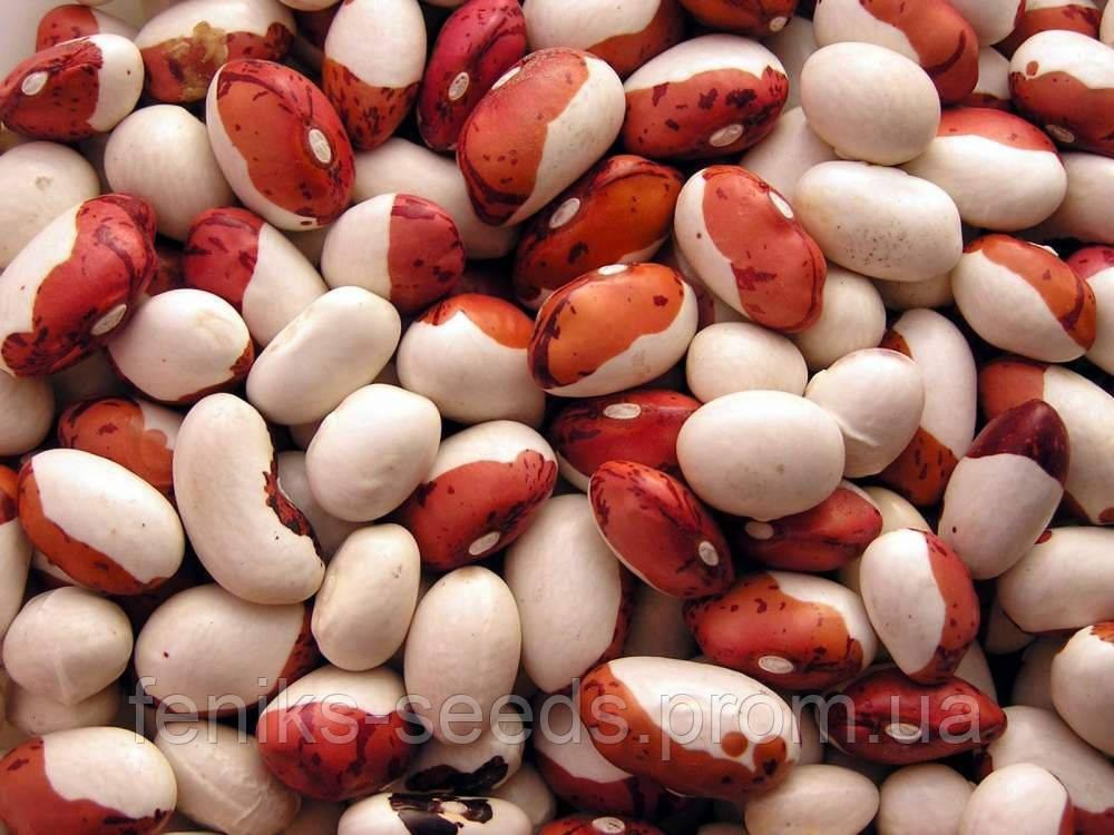 Фасоль Юбка семена