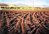НЕ ДАВИТЕ, МУЖИКИ! НЕ ДАВИТЕ!...  (Обзор: как выращивать растения и не утаптывать почву?) (Часть 1)