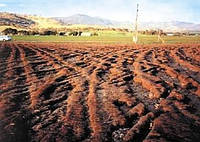 НЕ ДАВИТЕ, МУЖИКИ! НЕ ДАВИТЕ!...  (Обзор: как выращивать растения и не утаптывать почву?) (Часть 2)
