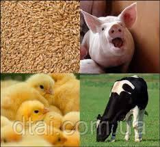 Подкислитель корма для животных и птицы (Нидерланды)