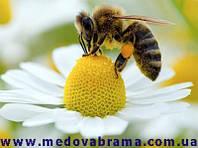 Вниманию пчеловодов Украины! Болезни пчел не страшны…