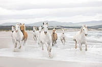 Фотообои на плотной полуглянцевой бумаге для стен 368*254 см из 8 листов: Животные, Белые Лошади